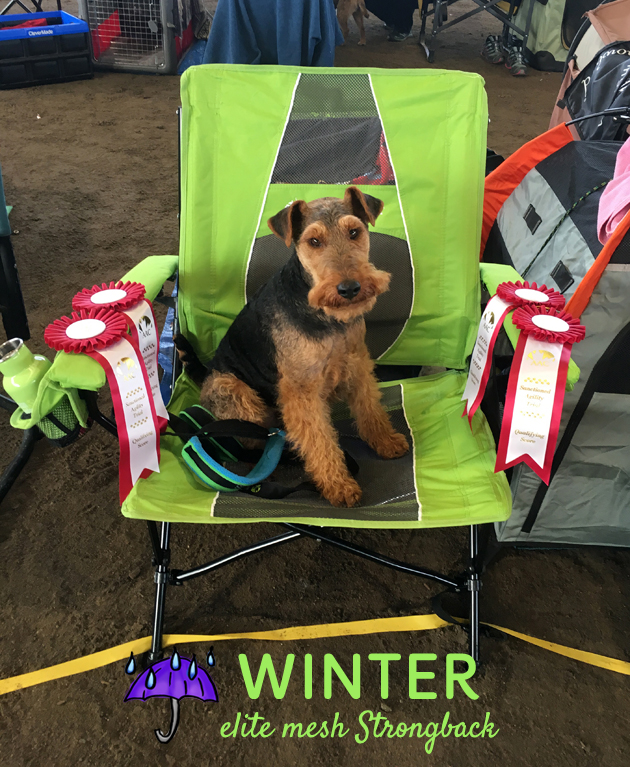The Ultimate Travel Chair For Dog Sports, and Beyond