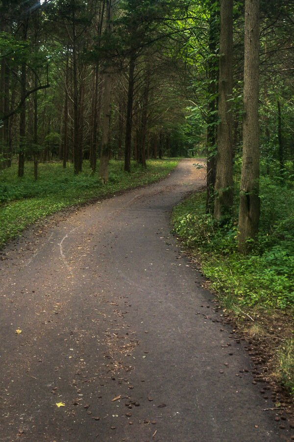 Paved Bike Path in the Woods
