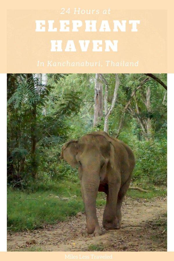 24 Overnight Stay at Elephant Kanchanaburi Elephant Walking
