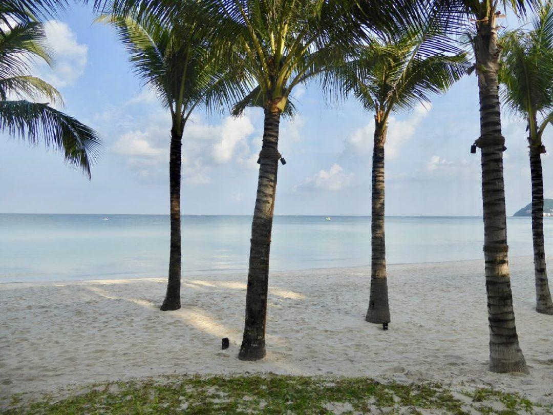 Vietnam E-Visa palm tree beach