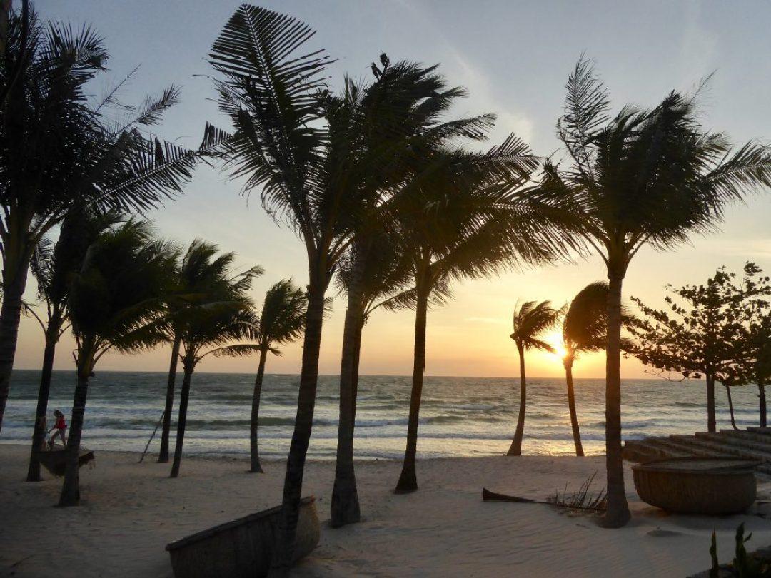 Vietnam E-Visa Palm Tree Phu Quoc