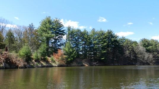 Pretty pine-lined sandy bank.