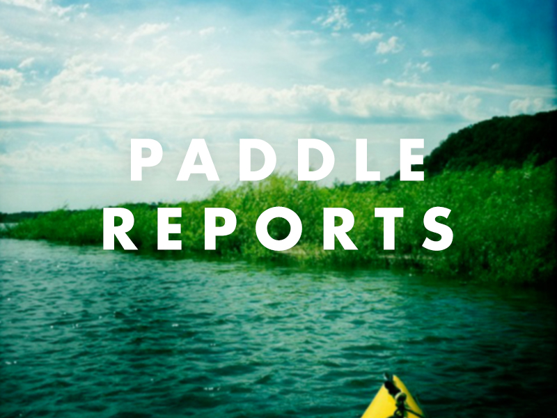 Paddle Reports Page