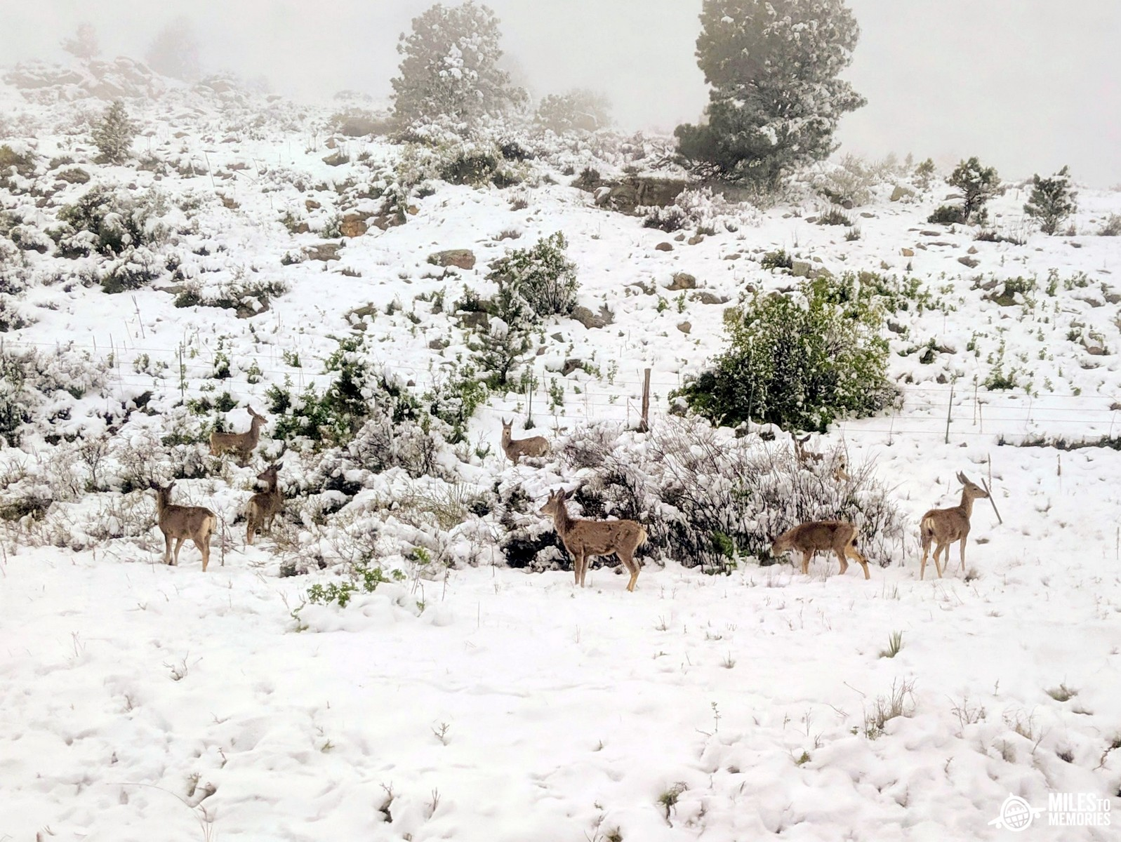 Amtrak California Zephyr Delays Deer