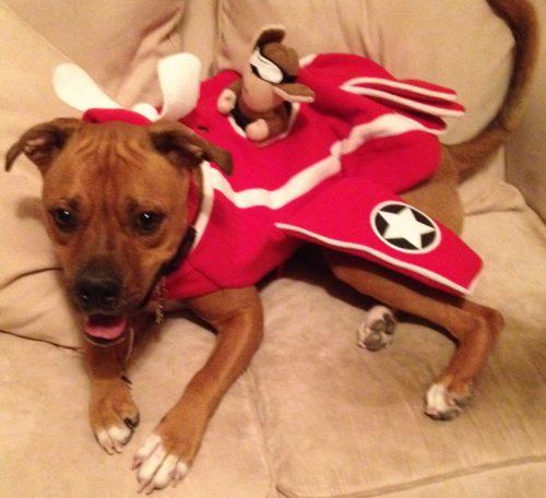 Mil$ Dog Halloween