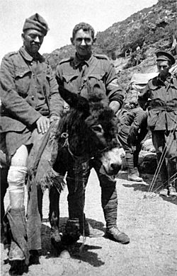 Those Brave Jackasses — Meet Some Heroic Wartime Donkeys