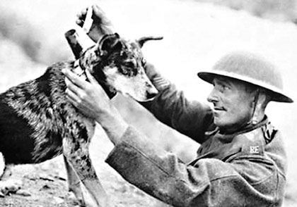 The Dogs of War -- A Short History of Canines in Combat