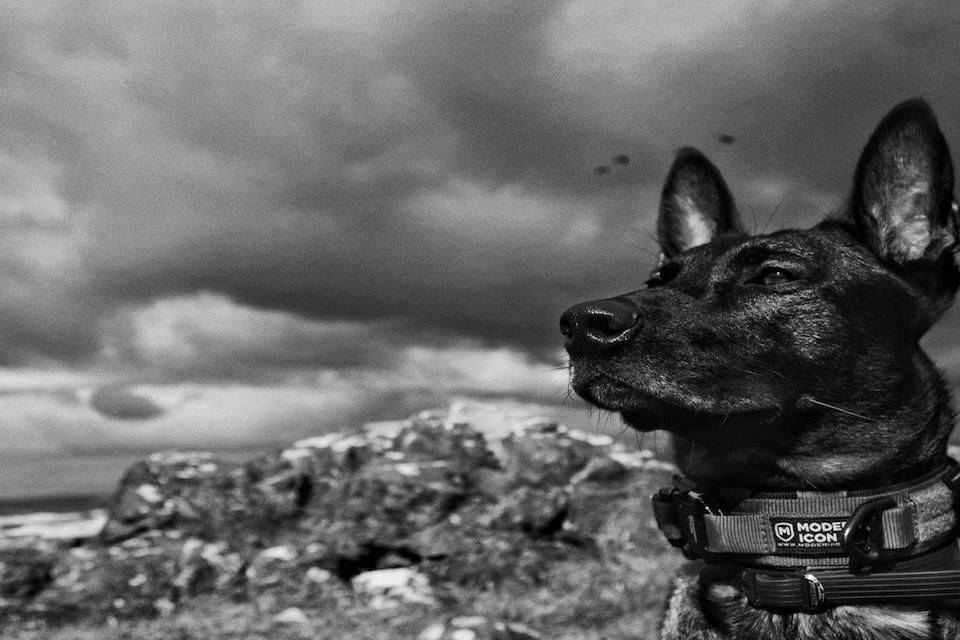 UK Military Dog to Receive PDSA Dickin Medal After Tackling Al Qaeda Insurgents