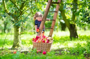 Apple Recipes for Autumn