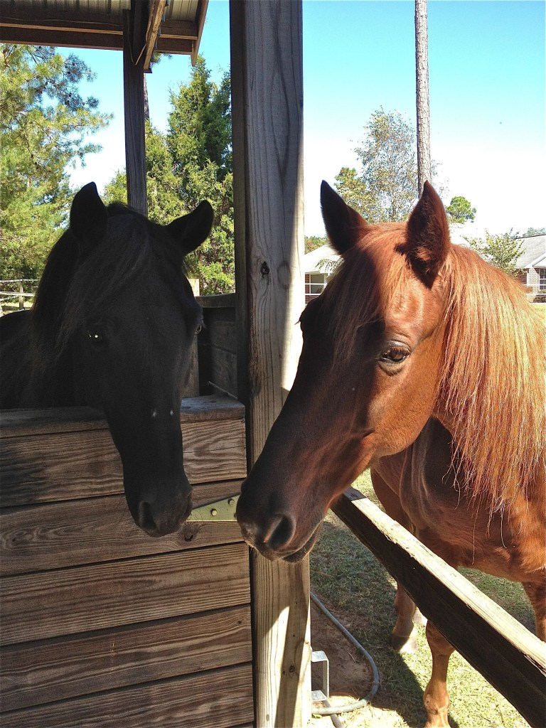 adopted rescue horse and foster rescue horse
