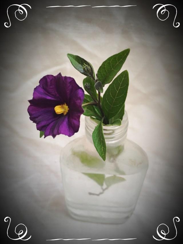 Purple flower from my children