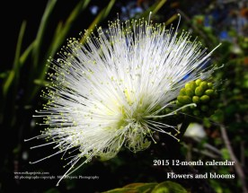 2015 flower and bloom calendar - front cover