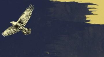 raven-lax-night