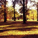 fall-trees-windsor-canada