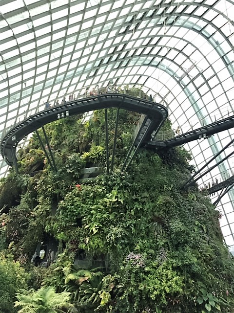 SIN cloud forest