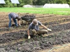 Eel grass mulch