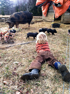 Daire' & scurrying piglets