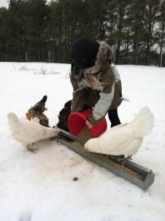 Maeve feeding the chickens amid gusty snow