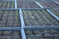 Sprouts have sprung