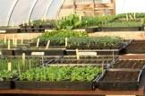 greener green house