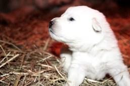 Seamus' puppy portrait