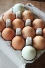 open egg carton