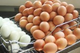 egg washing