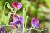 flowers on trellis