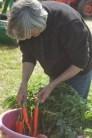 jacqui washing carrots
