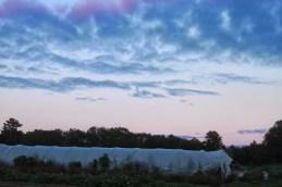 skies at dusk