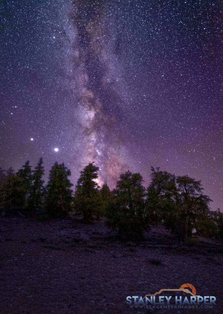 Bristlecone pines and the Milky Way.