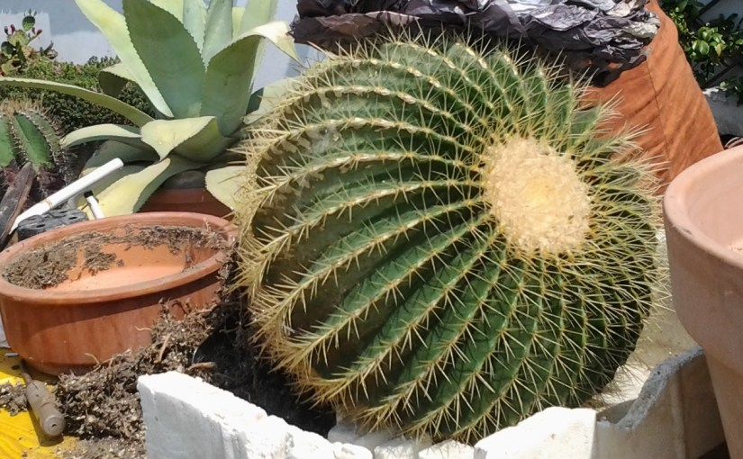 Rinvasare cactus e succulente: perchè, come, quando