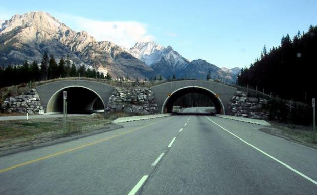 banff-national-park-ablerta-canada-animal-bridge-wildlife-crossing-overpass