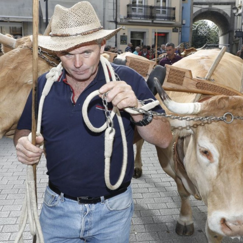 Desfile de ganado en San Froilán Agricultura
