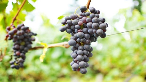Convocadas ayudas para promocionar el vino gallego fuera de la UE 1920