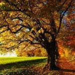 arbres aux couleur d'automne