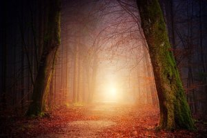 poésie et nature