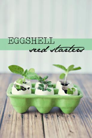 Eggshell-Seed-Starters-4