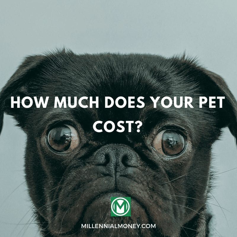 The costs of pet ownership