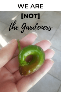 We Are [Not] the Gardeners (Sowing + Reaping)   Millennials with Meaning