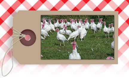 Fresh, Frozen, Pastured Turkeys