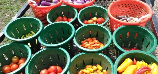 Summertime produce is in full swing!