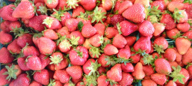 Strawberries!  Pre-Picked by the Quart!