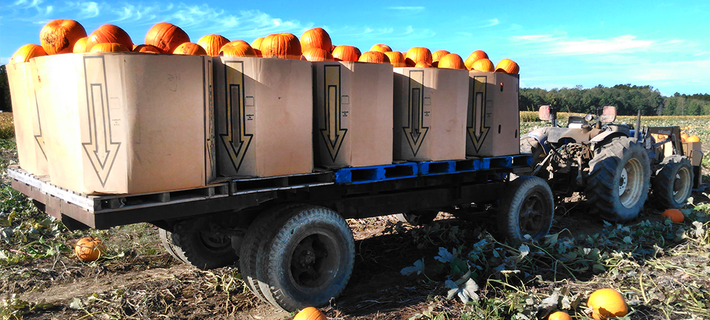 Wholesale Pumpkin Information