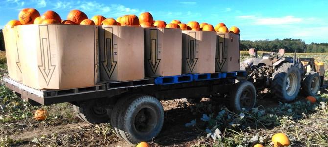 Wholesale Pumpkin Information