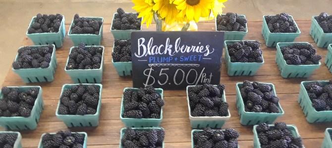 Blackberries, fresh picked!  Plenty!
