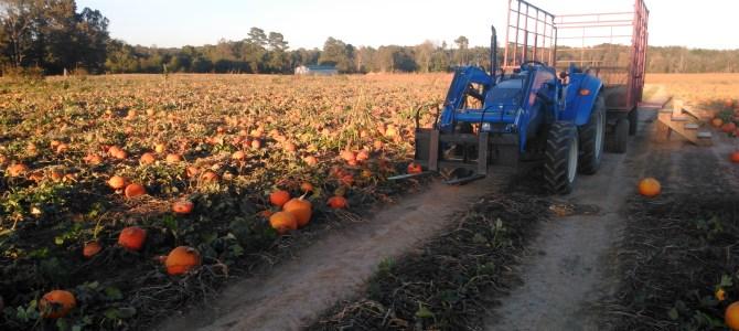 Hayrides!  Mini Pumpkins!  Jack O Lanterns! Heirlooms!  Maple Bacon Sundaes!