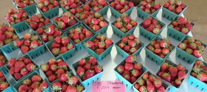 Strawberries, pre-picked by the quart, we have PLENTY of them!