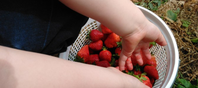 Have you picked your Strawberries yet?