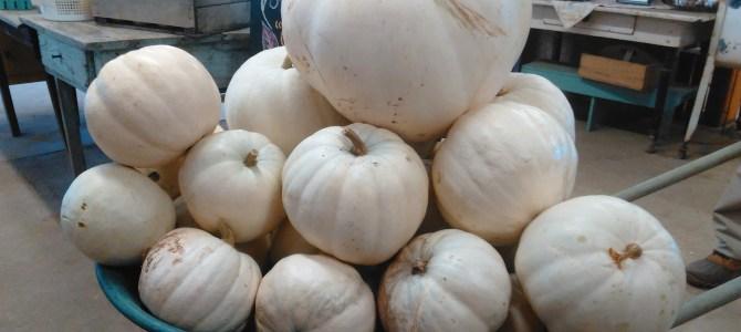 Pumpkins!  Check out our Wheelbarrow Deal!